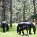 Rianne, Bella and Zannie Grazing